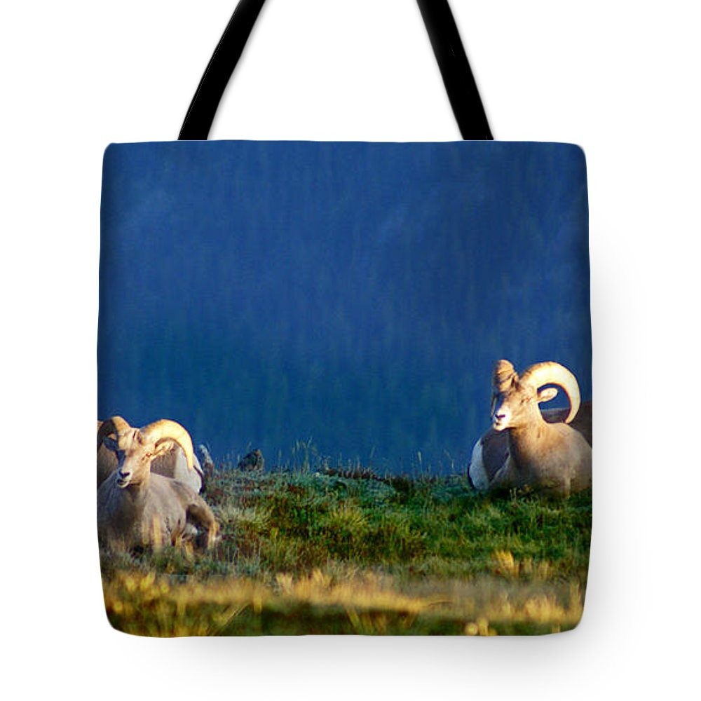 Bighorn Sheep Tote Bag featuring the photograph Big Horns by Heather Coen