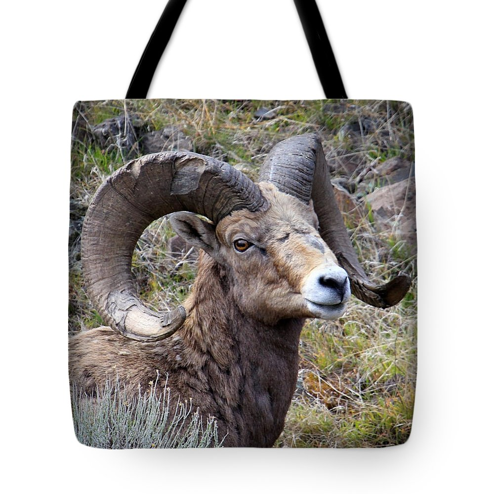 Bighorn Sheep Tote Bag featuring the photograph Bighorn Battle Scars by Steve McKinzie