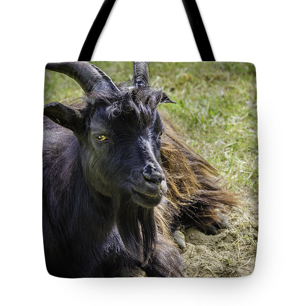 Goat Tote Bag featuring the photograph Billy The Kid by LeeAnn McLaneGoetz McLaneGoetzStudioLLCcom