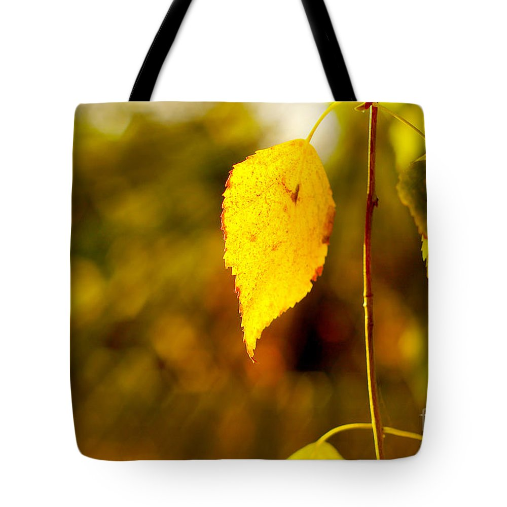 Fall Tote Bag featuring the photograph Birch Leaves by Dariusz Gudowicz