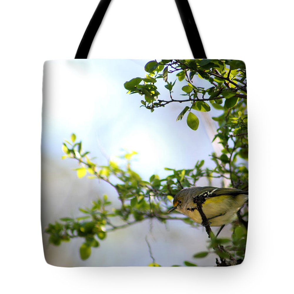 Silver Springs Tote Bag featuring the photograph Bird by Allan Lovell