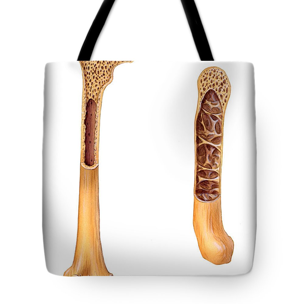 Bird And Human Bone Structure Tote Bag For Sale By Carlyn Iverson