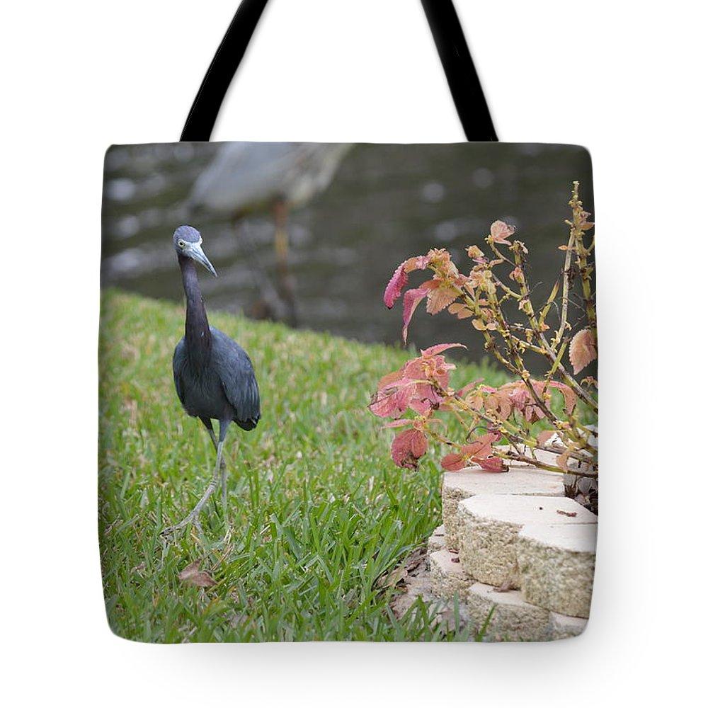 Florida Tote Bag featuring the photograph Bird In Yard by Linda Kerkau