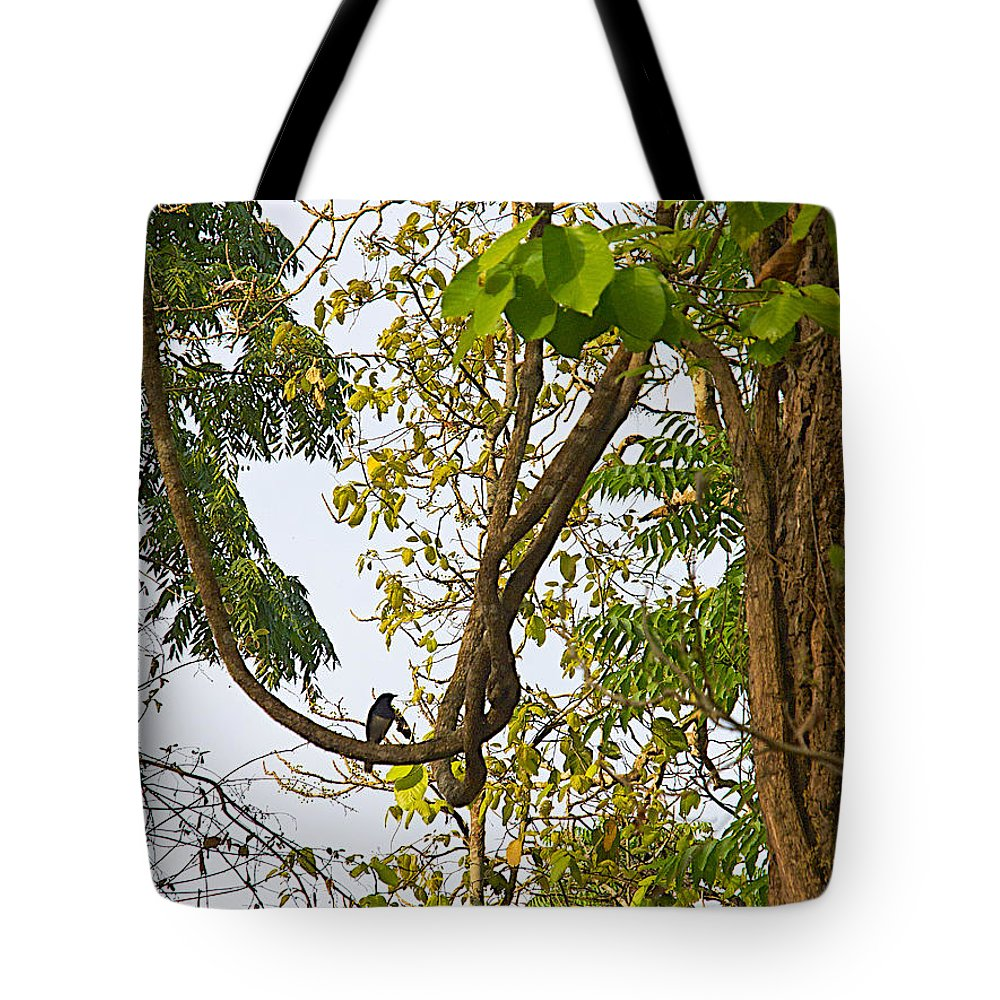Bird On A Vine In Jungle Forest In Chitwan National Park In Nepal Tote Bag featuring the photograph Bird On A Vine In Jungle Forest In Chitwan Np-nepal by Ruth Hager
