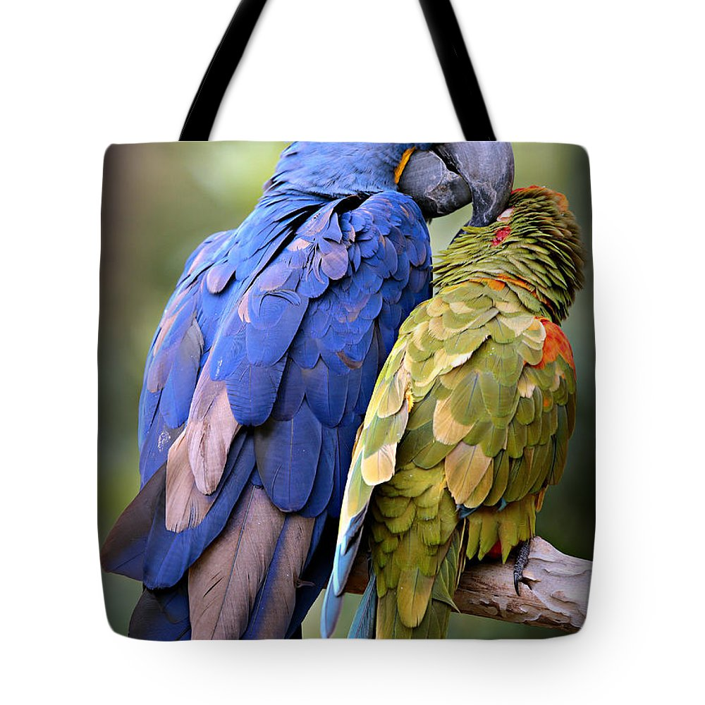 Macaw Photographs Tote Bags