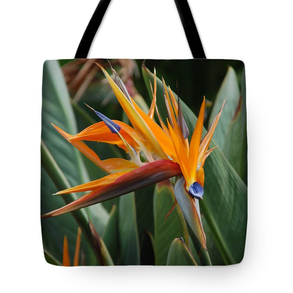 Birds Of Paradise Tote Bag featuring the photograph Birds Of Paradise by Mark Thompson