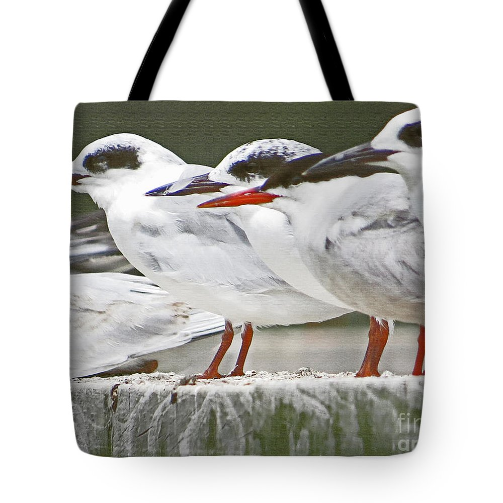 Seagull Tote Bag featuring the photograph Birds On A Ledge by Dawn Gari