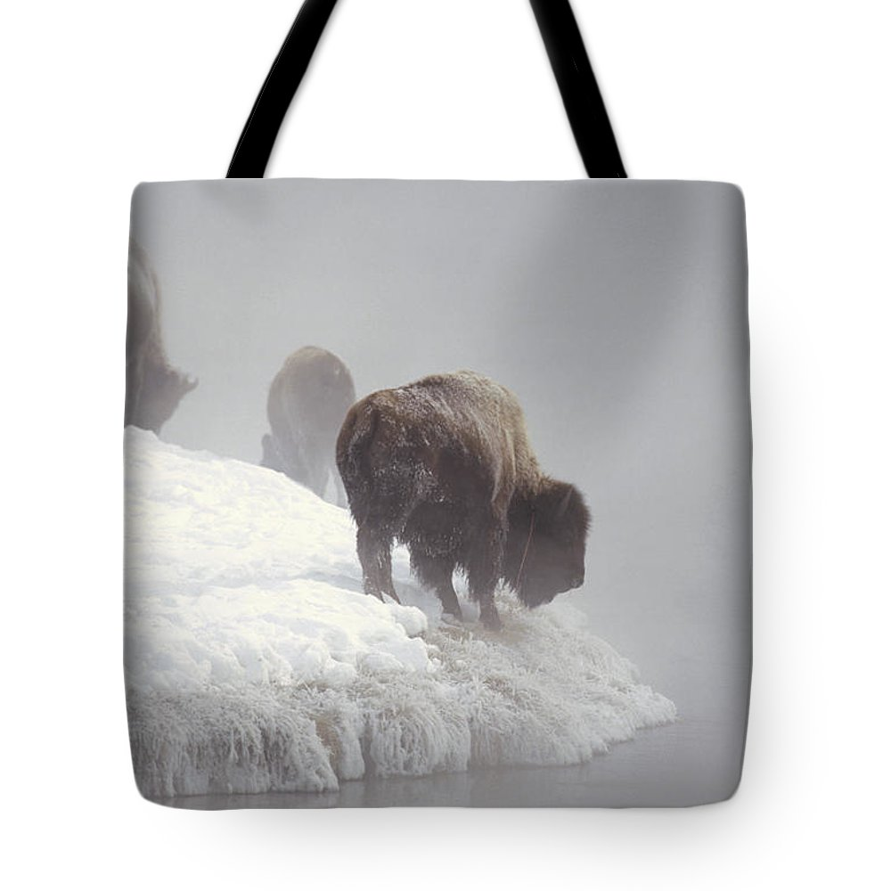 Feb0514 Tote Bag featuring the photograph Bison Along Snowy Riverbank Yellowstone by Konrad Wothe