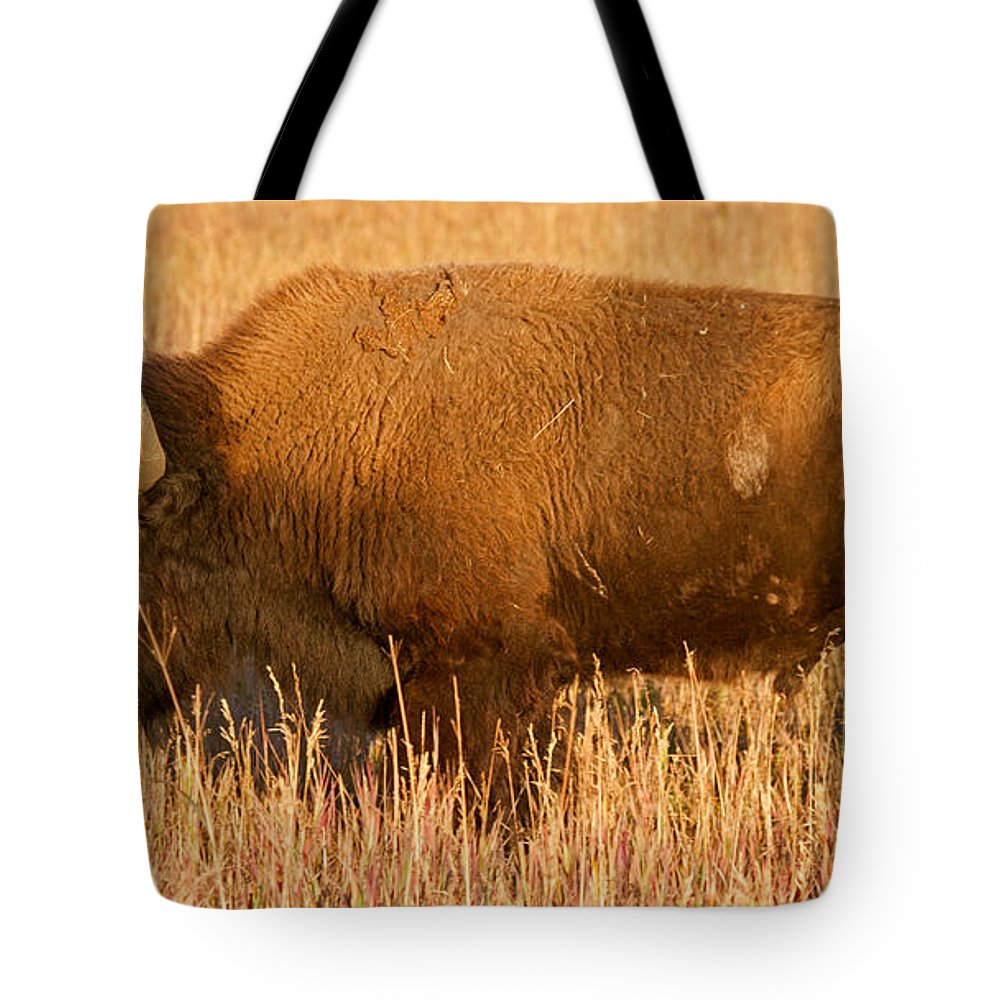 Animal Tote Bag featuring the photograph Bison At The Elk Ranch In Grand Teton National Park by Fred Stearns