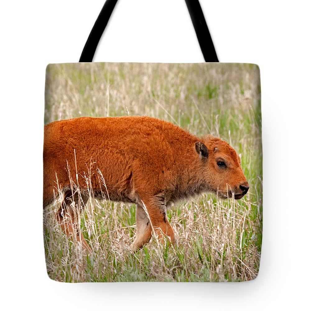 Afternoon Tote Bag featuring the photograph Bison Calf Grand Teton National Park by Fred Stearns