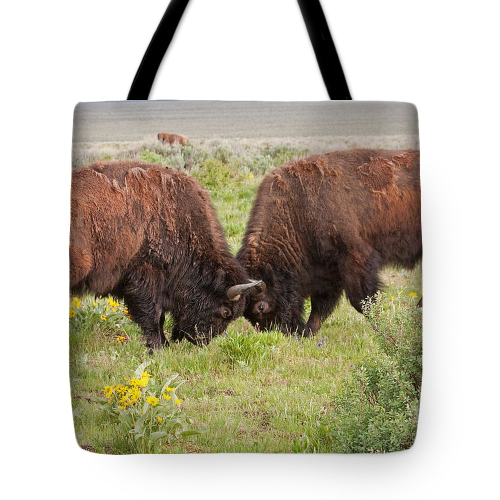 Antelope Flats Road Tote Bag featuring the photograph Bison Fight In Grand Teton National Park by Fred Stearns