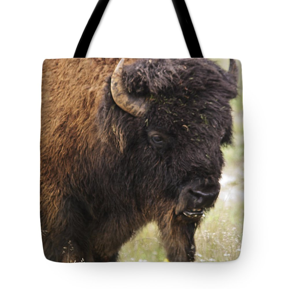 Buffalo Tote Bag featuring the photograph Bison From Yellowstone by Belinda Greb