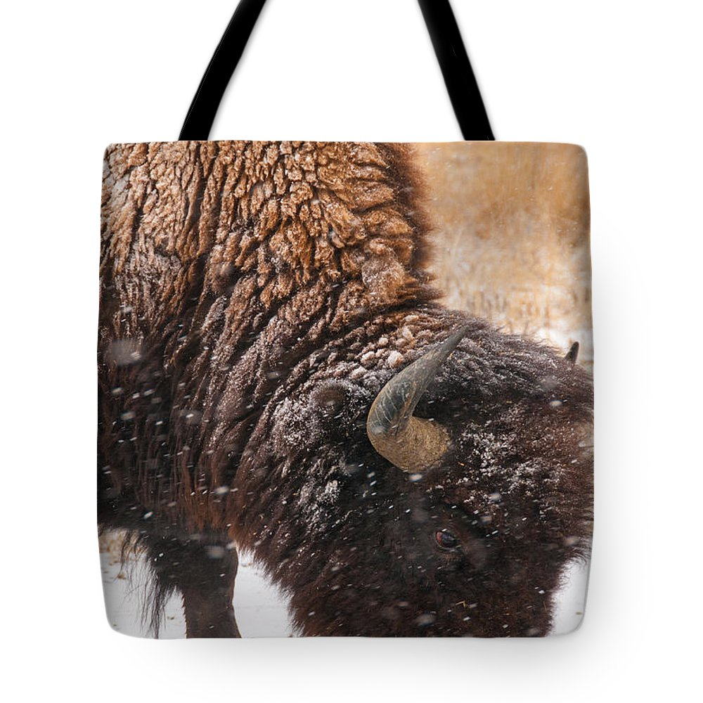 Bison Tote Bag featuring the photograph Bison In Snow_1 by Tom Potter