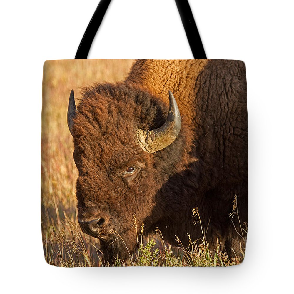 Animal Tote Bag featuring the photograph Bison Potrait At Teh Elk Ranch In Grand Teton National Park by Fred Stearns