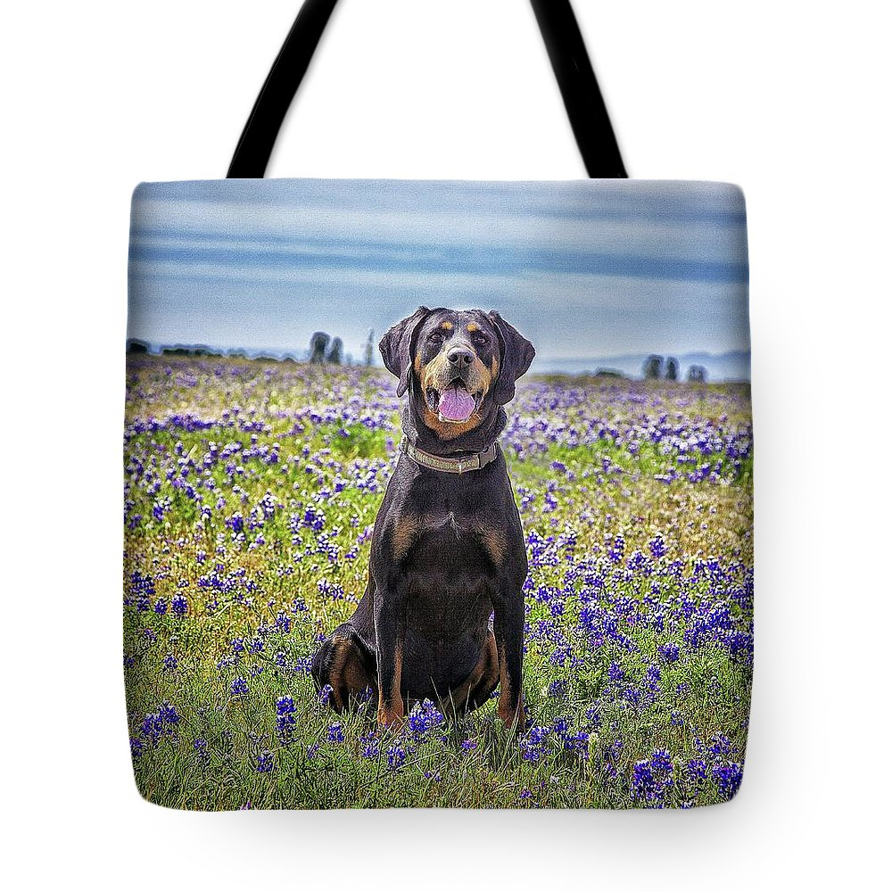 Animal Themes Tote Bag featuring the photograph Black And Tan Coonhound In Field Of by Sunmallia Photography