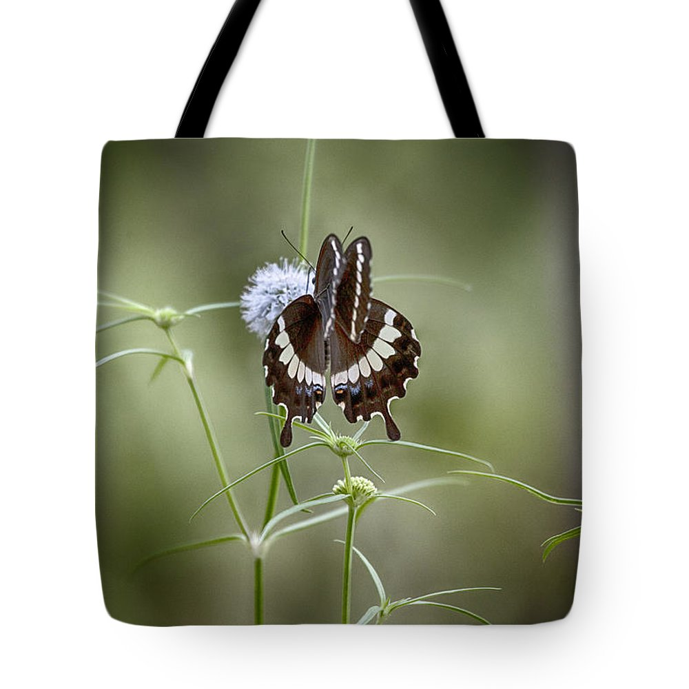 Butterfly Tote Bag featuring the photograph Black And White Butterfly V2 by Douglas Barnard