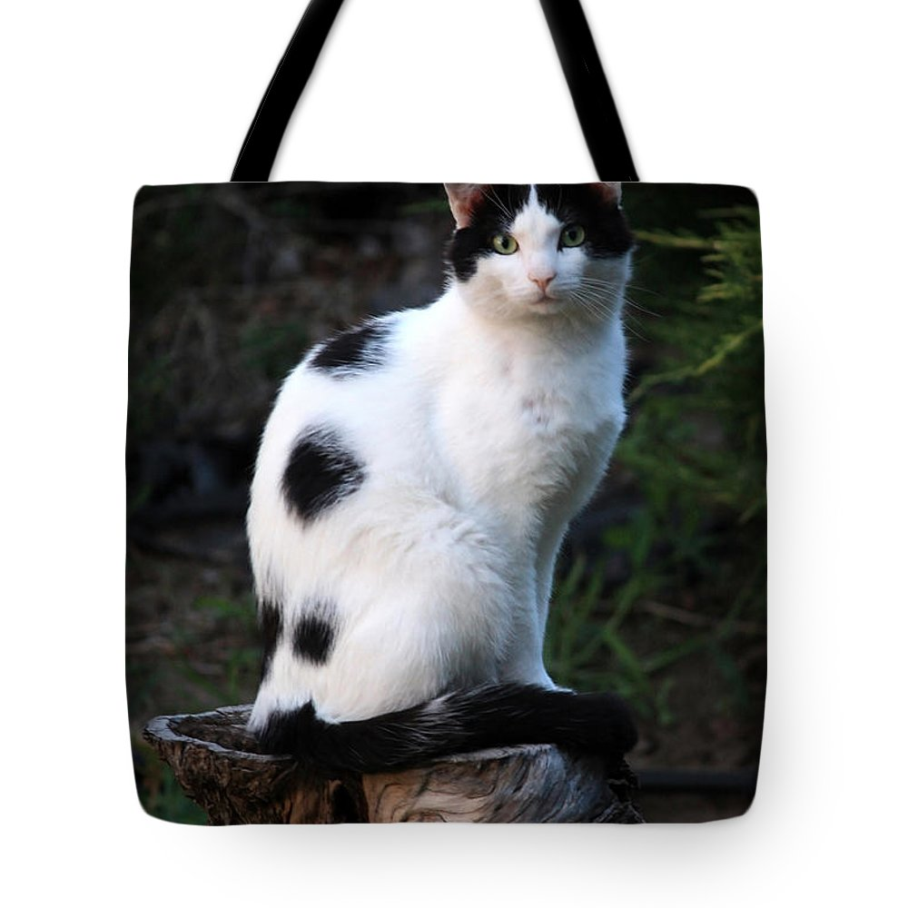 Black And White Cat On Tree Stump Tote Bag for Sale by Carol Groenen