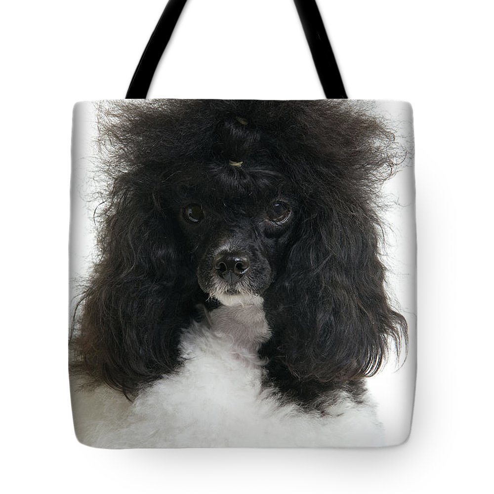Poodle Tote Bag featuring the photograph Black And White Poodle by Jean-Michel Labat