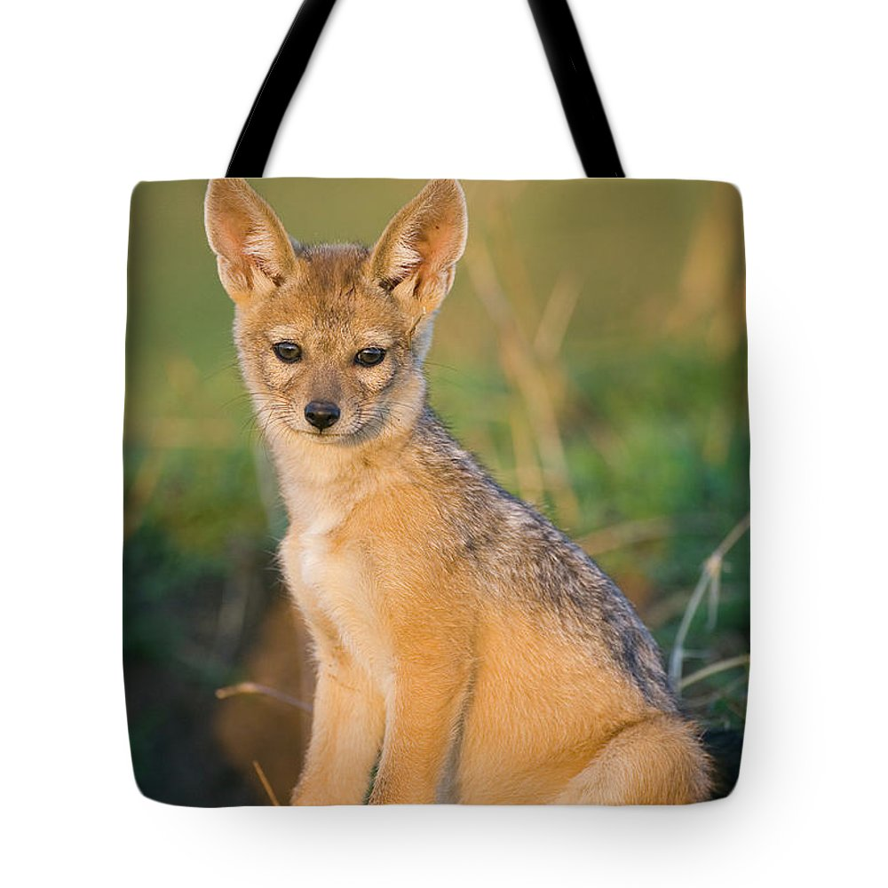 Baby Tote Bag featuring the photograph Black-backed Jackal Canis Mesomelas by Suzi Eszterhas