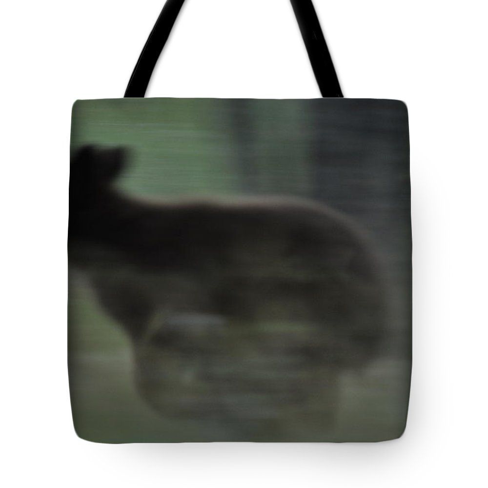 Black Bear Tote Bag featuring the photograph Black Bear Cub Running by Frank Madia