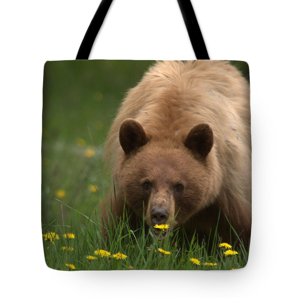 Bear Tote Bag featuring the photograph Black Bear by Frank Madia