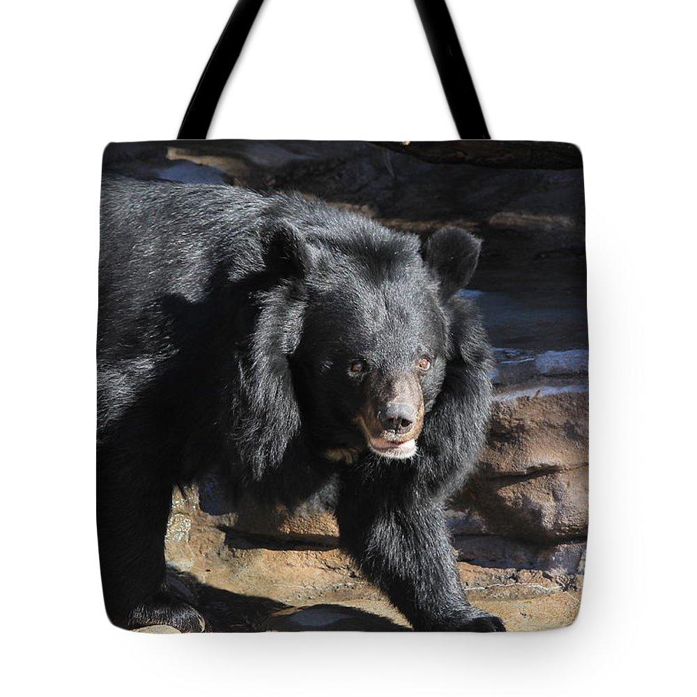 Bear Tote Bag featuring the photograph Black Bear by Tonya Hance