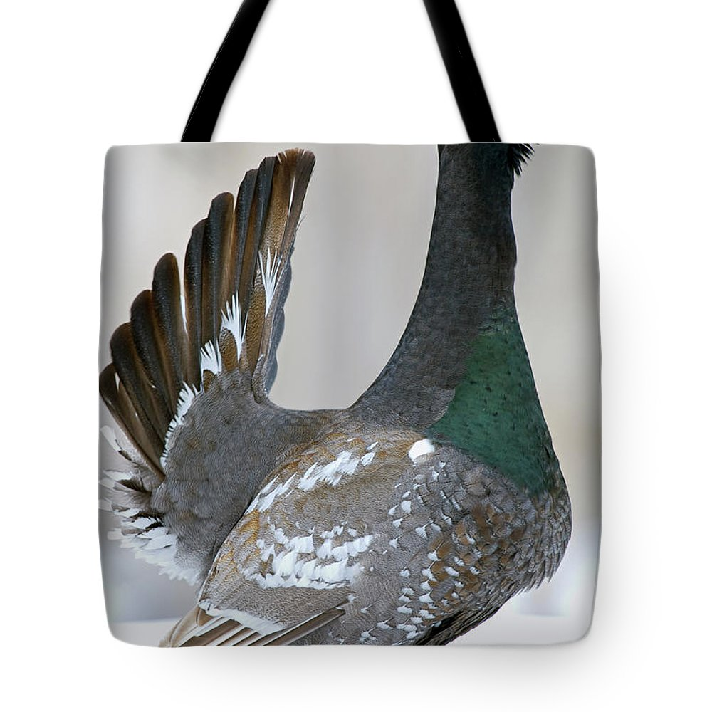 Black-billed Capercaillie Tote Bag featuring the photograph Black-billed Capercaillie Displaying by Sergey Gorshkov