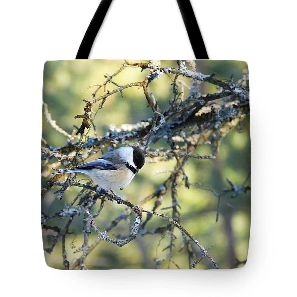 Chickadee Tote Bag featuring the photograph Black Capped Chickadee by Debbie Oppermann