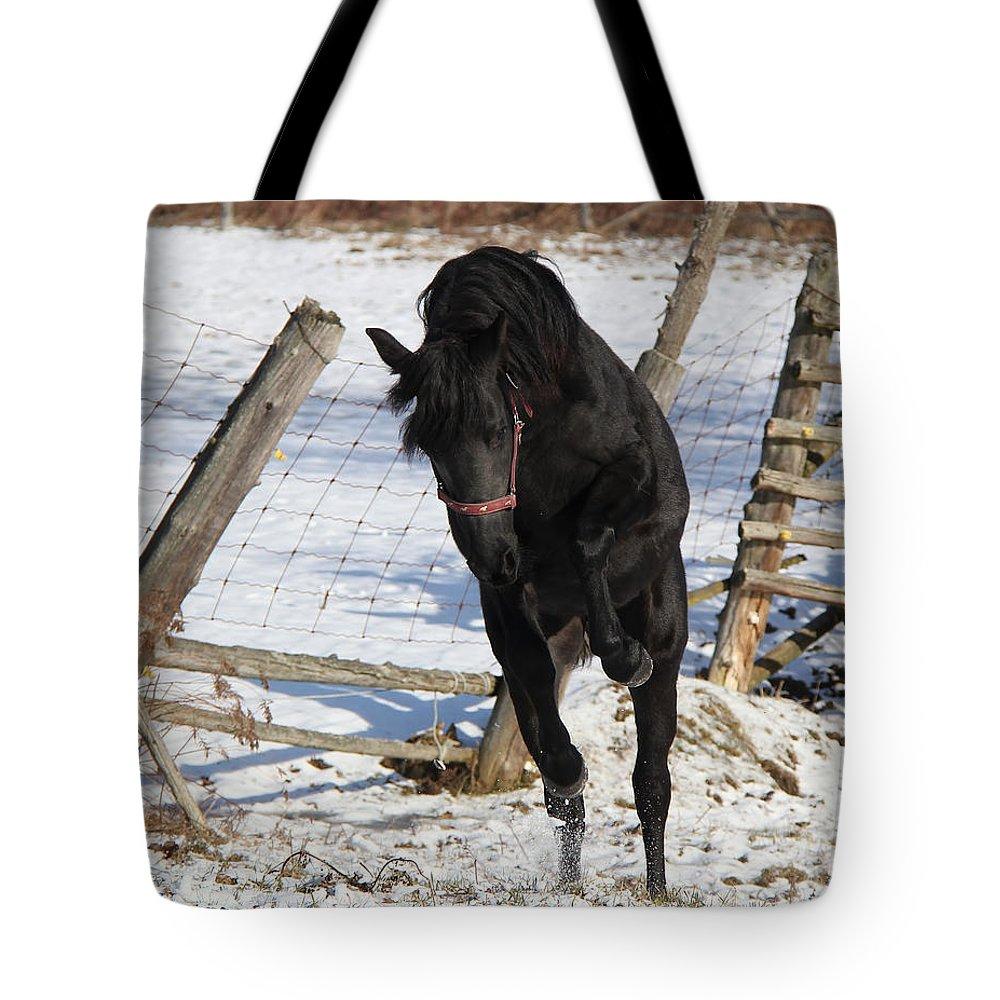 Animal Tote Bag featuring the photograph Black Diamond Jubilee 3 by Davandra Cribbie