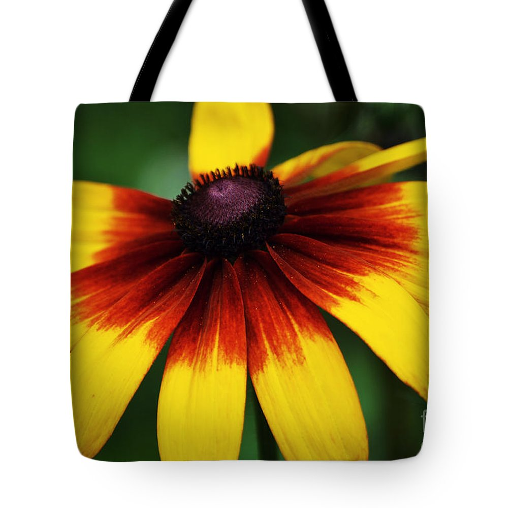Black Eye Tote Bag featuring the photograph Black Eyed Susan 2 by Kevin Fortier