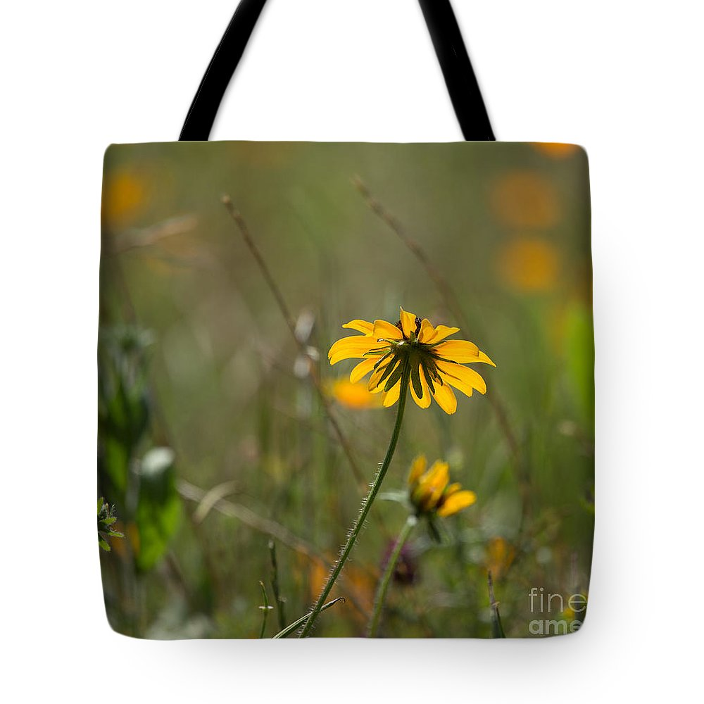 Black Eyed Susan Tote Bag featuring the photograph Black-eyed Susan by Louise Heusinkveld