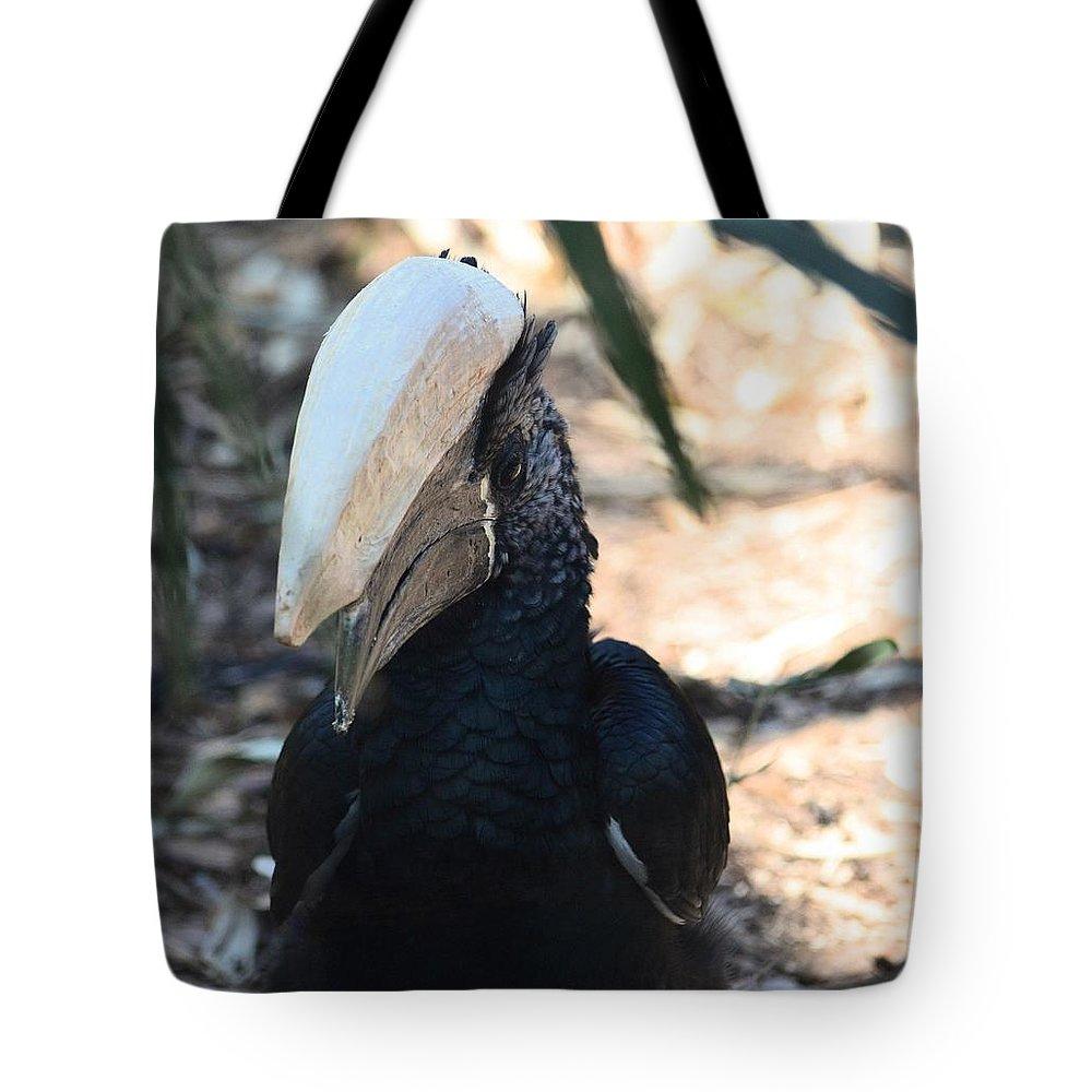 Black Hornbill Tote Bag featuring the photograph Black Hornbill by Maria Urso