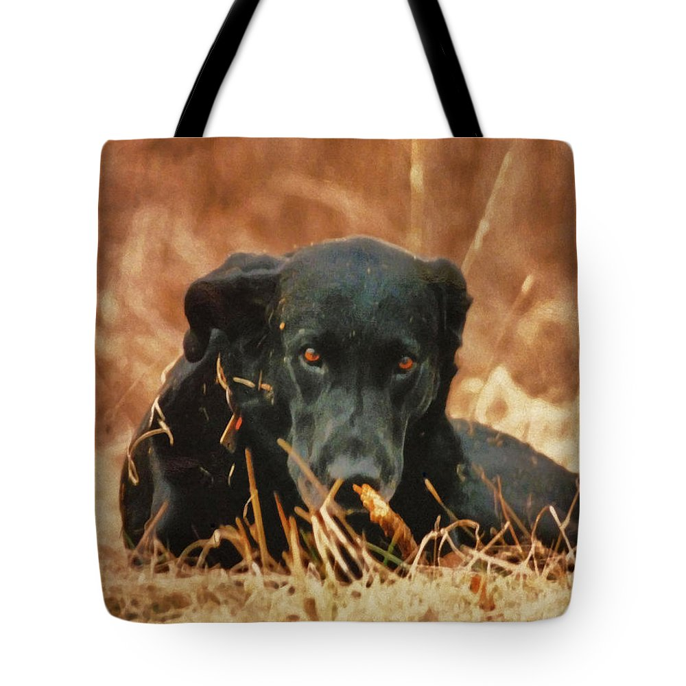 Black Labrador Tote Bag featuring the photograph Black Labrador by Linda Sannuti