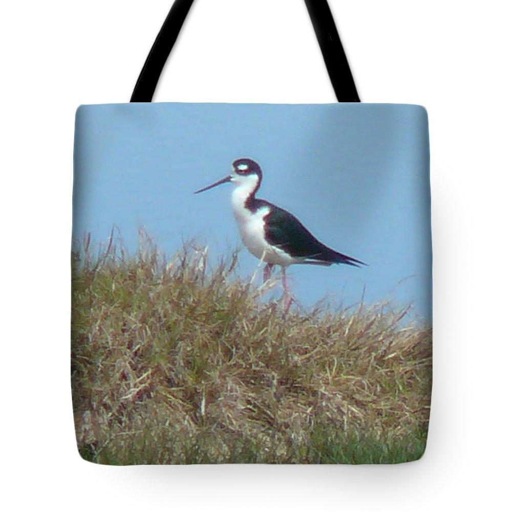 Bird Tote Bag featuring the photograph Black-necked Stilt by Eldora Schober Larson