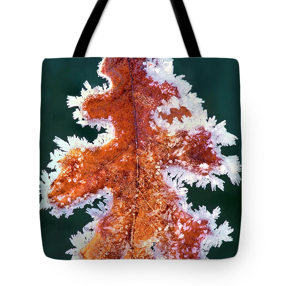 North America Tote Bag featuring the photograph Black Oak Leaf Rime Ice Yosemite National Park California by Dave Welling