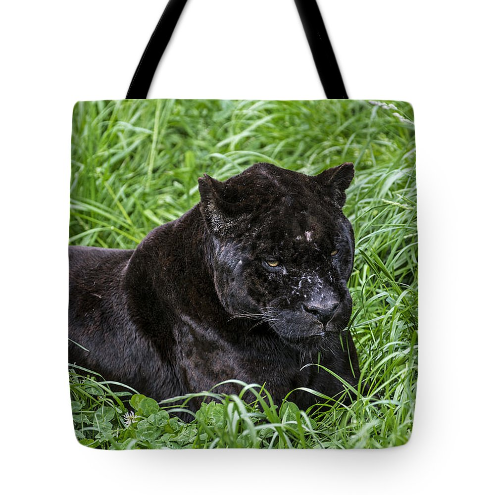 Melanistic Tote Bag featuring the photograph Black Panther by Arterra Picture Library