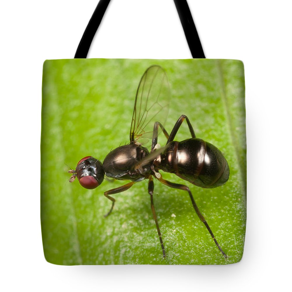 Clarence Holmes Tote Bag featuring the photograph Black Scavenger Fly by Clarence Holmes