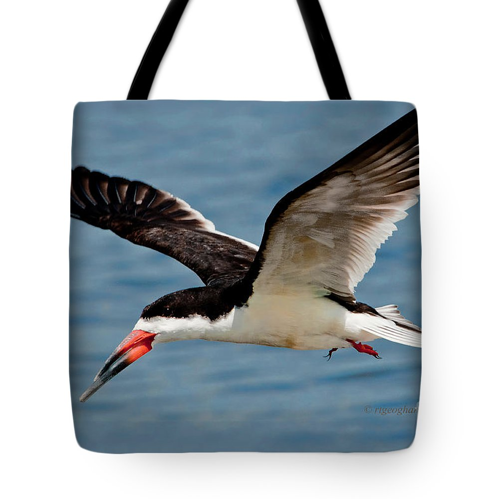 Black Skimmer Tote Bag featuring the photograph Black Skimmer In Flight by Regina Geoghan