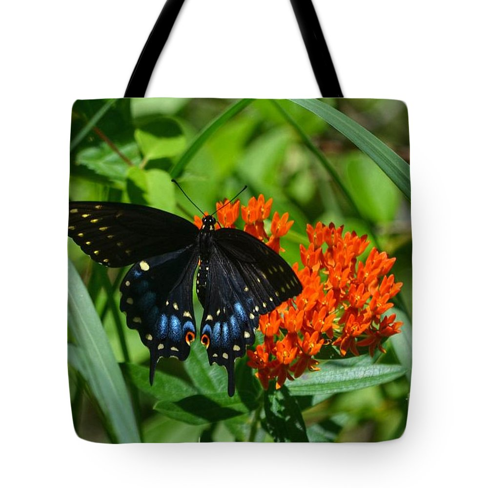 Black Swallow Tail Butterfly Tote Bag featuring the photograph Black Swallow Tail On Beautiful Orange Wildlflower by Peggy Franz
