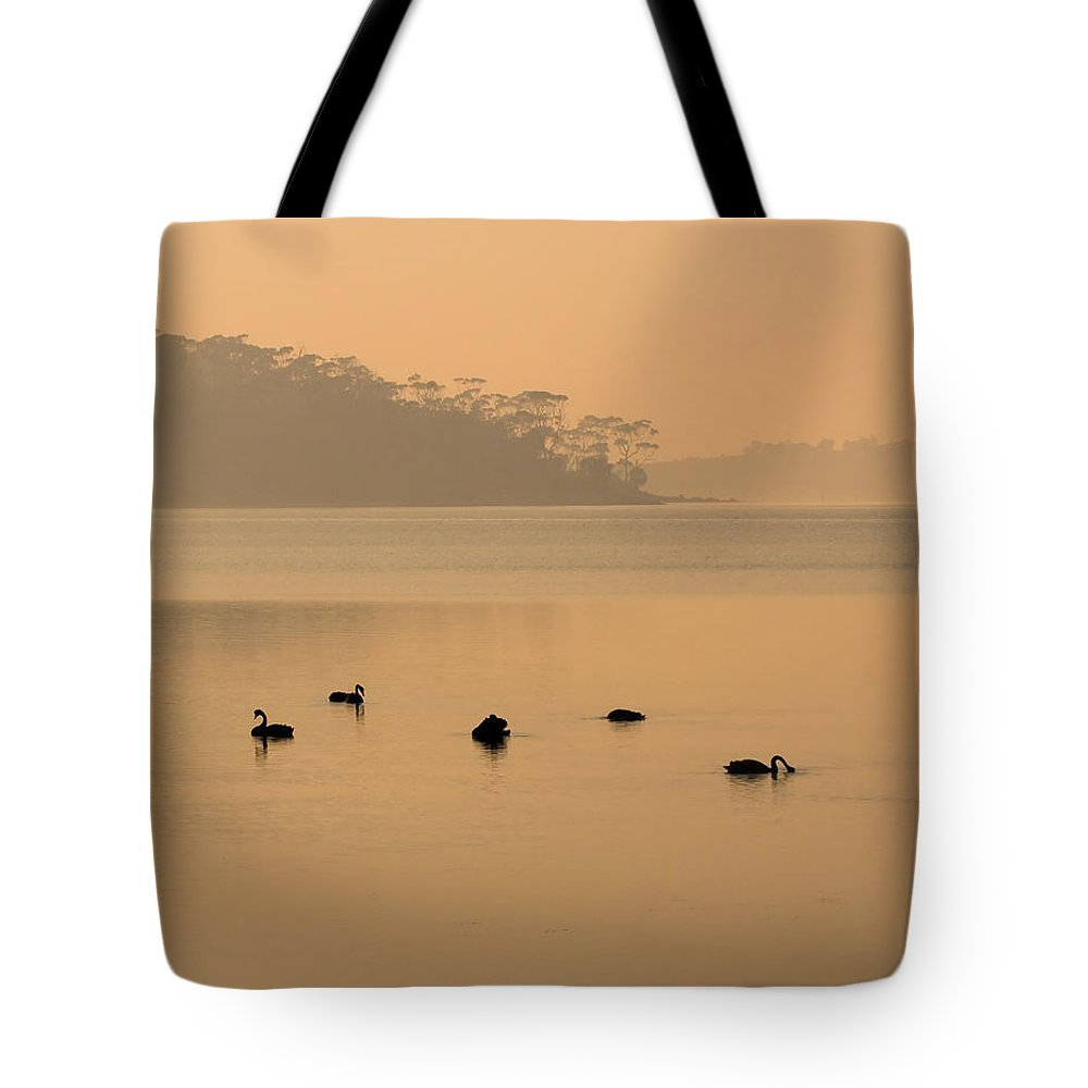 Black Swan Tote Bag featuring the photograph Black Swan Sunrise by Mike Dawson
