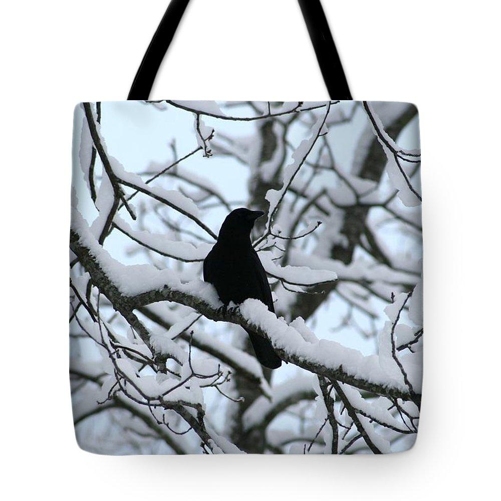 Blackbird Tote Bag featuring the photograph Blackbird On Snowy Limb II by Cody Cookston