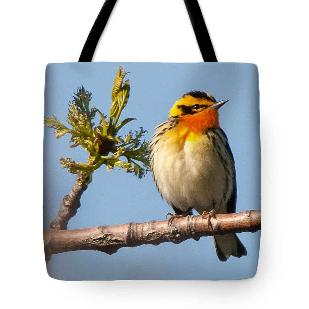 Bird Tote Bag featuring the photograph Blackburnian Warbler by Richard Kitchen