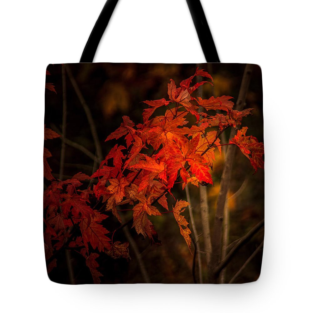 Autumn Tote Bag featuring the photograph Blaze Of Leaves by Shari Brase-Smith