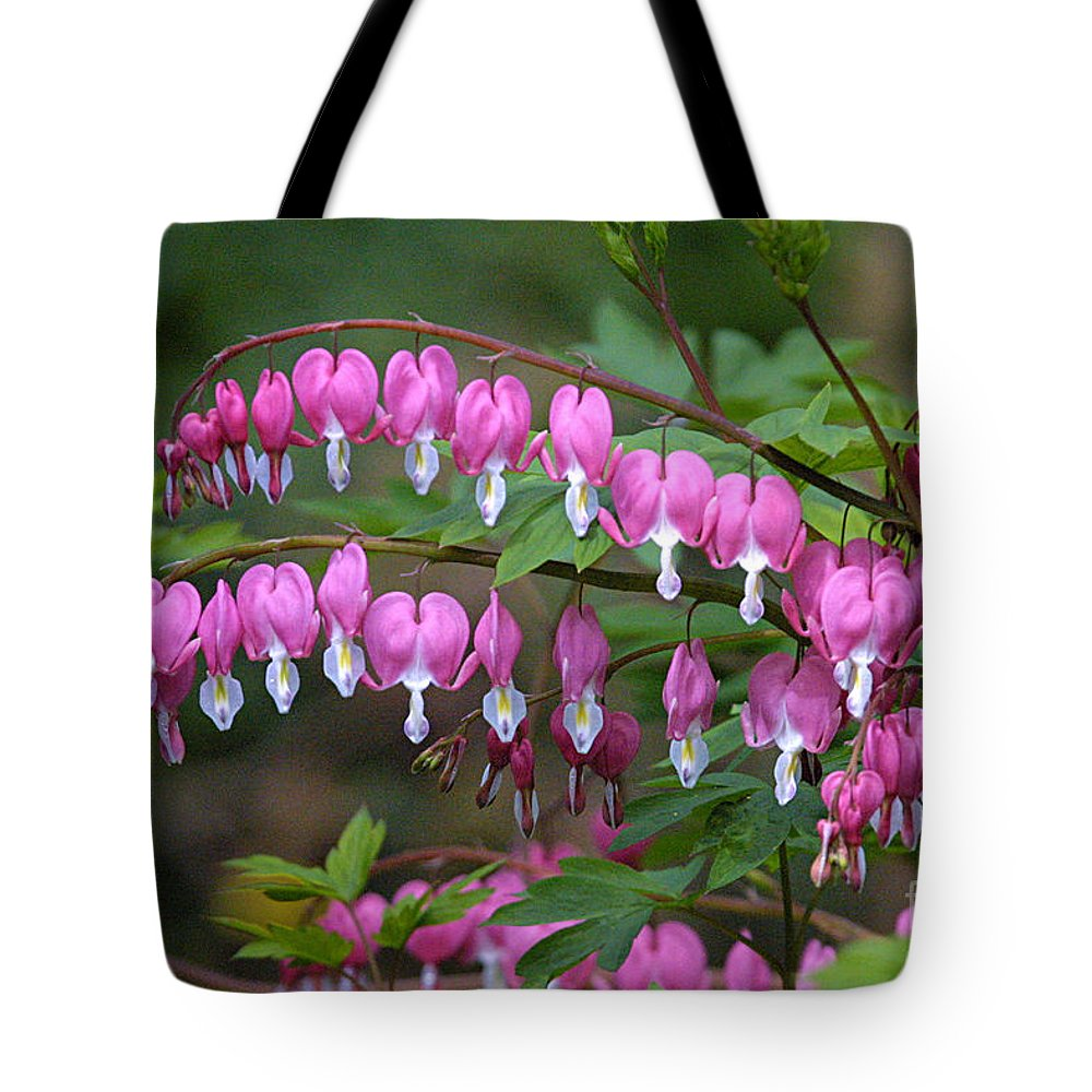 Bleeding Heart Tote Bag featuring the photograph Bleeding Hearts by CJ McKendry