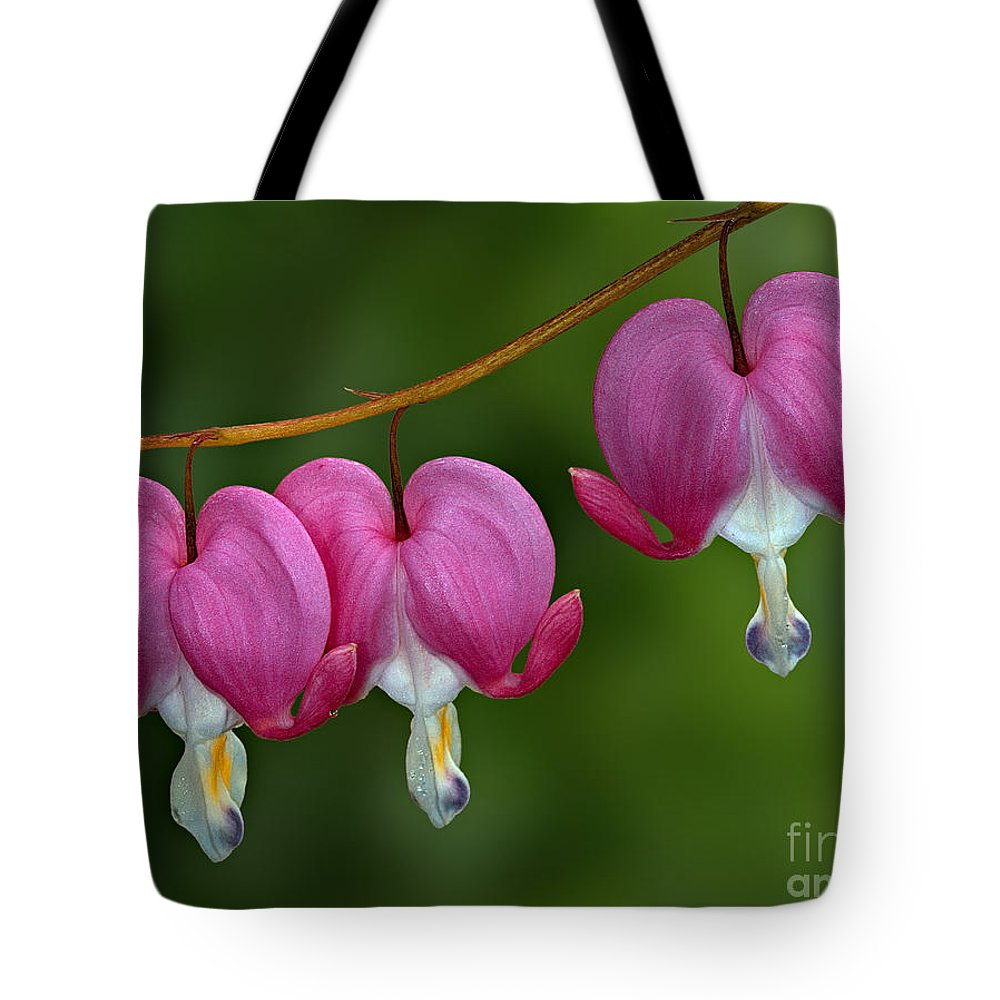 Bleeding Tote Bag featuring the photograph Bleeding Hearts by Susan Candelario