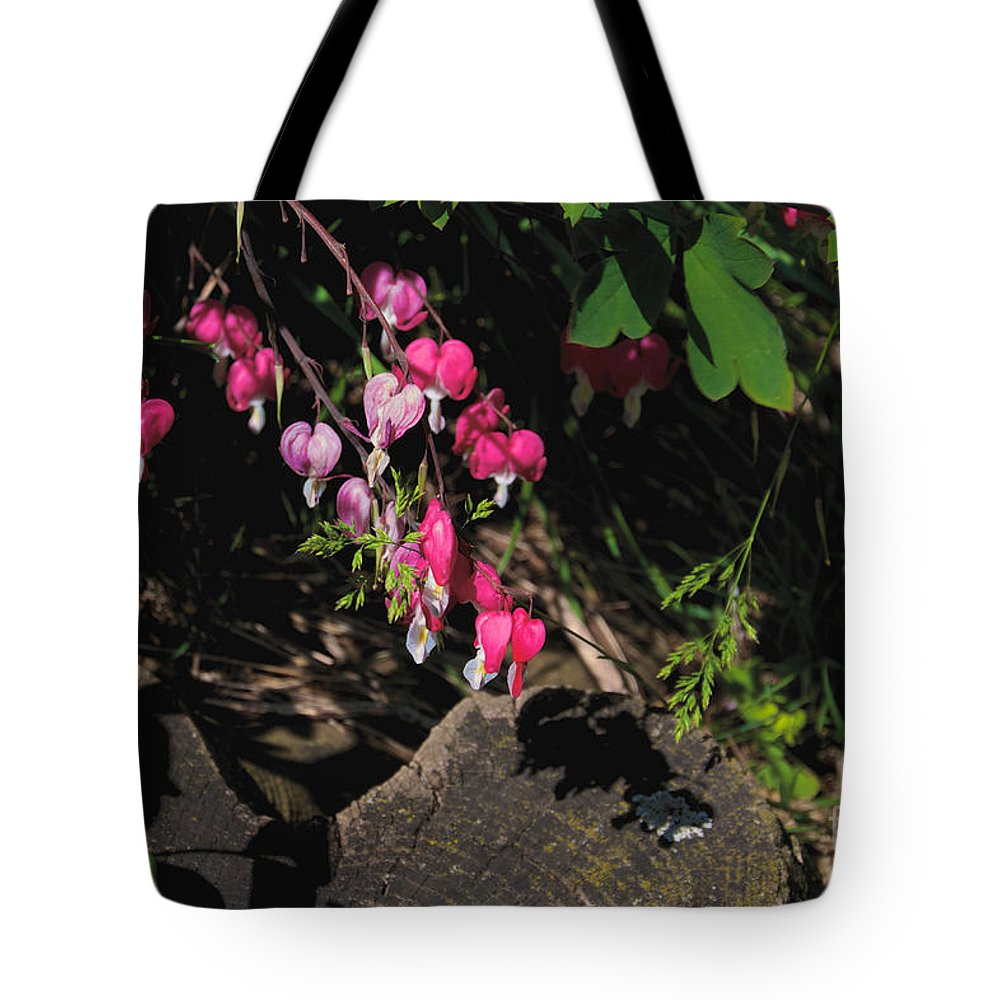 Bleeding Hearts Tote Bag featuring the photograph Bleeding Hearts by William Norton