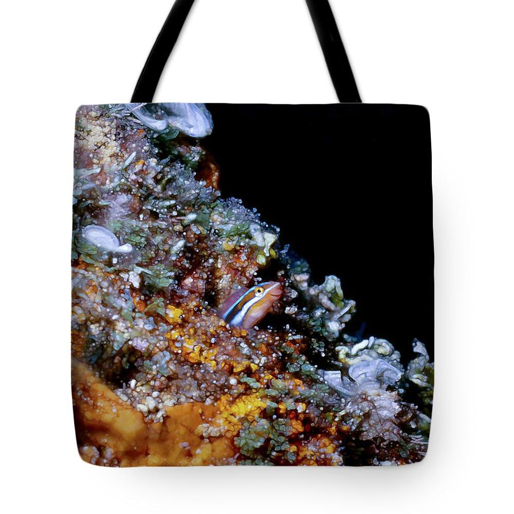 Micronesia Tote Bag featuring the photograph Blennys 1 by Dawn Eshelman