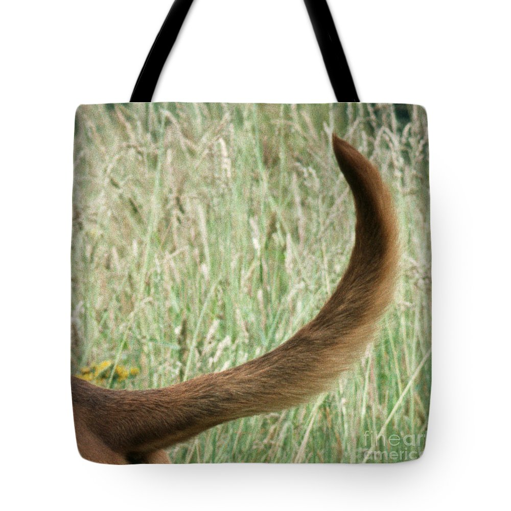 Bloodhound Tote Bag featuring the photograph Bloodhound Tail by John Daniels
