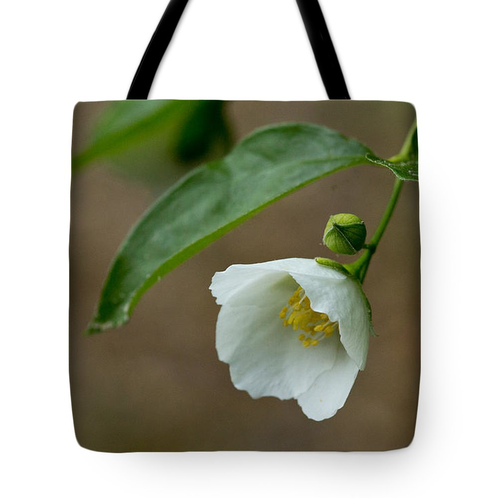 Sandra Clark Tote Bag featuring the photograph Blooming Flower by Sandra Clark