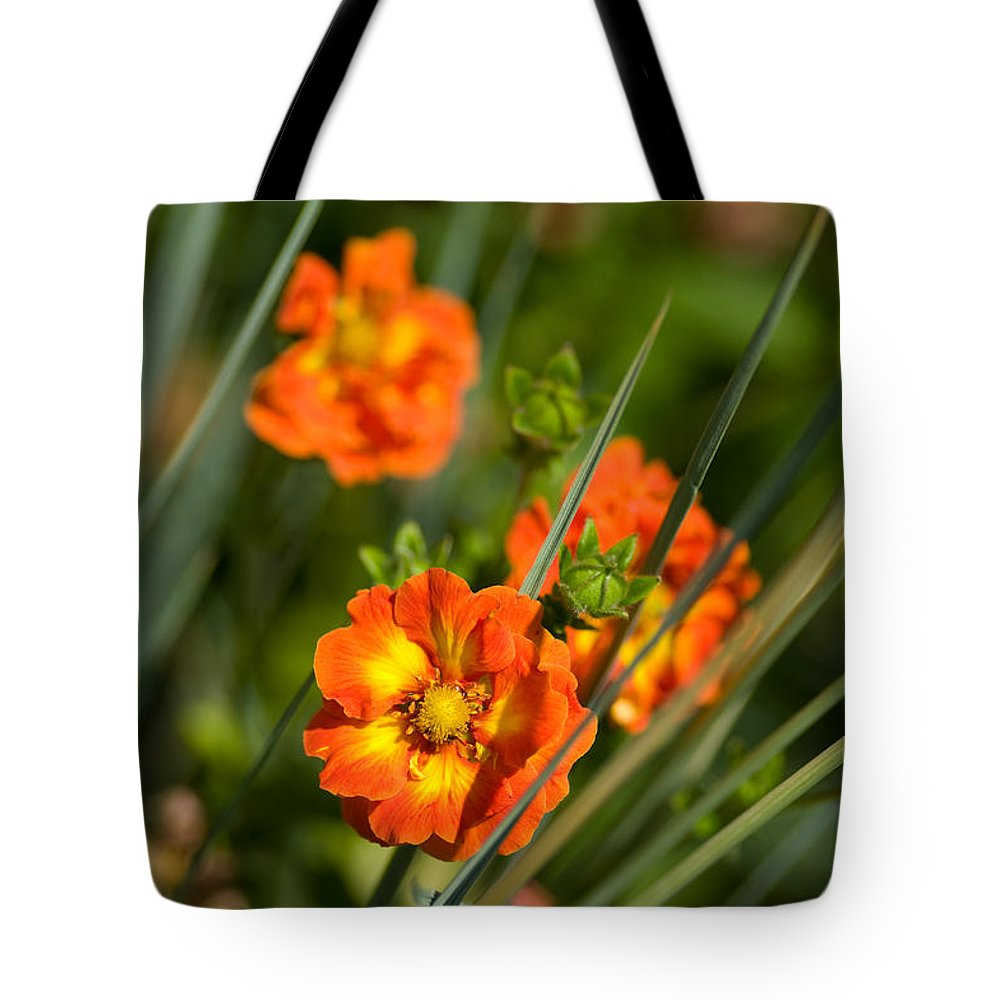 Blossom Tote Bag featuring the photograph Blossoms In The Reeds by Venetta Archer